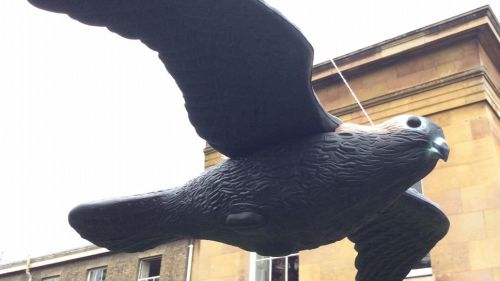 Decoy birds installed at Downing